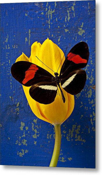 Yellow Tulip With Orange And Black Butterfly Metal Print