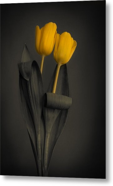 Yellow Tulips On A Grey Background Metal Print