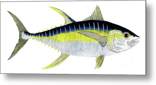 Yellowfin Tuna Metal Print