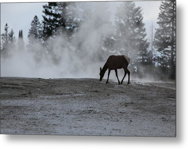 Yellowstone 5456 Metal Print