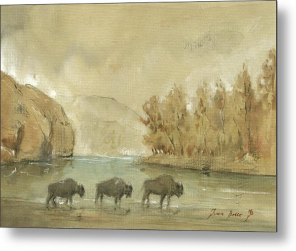 Yellowstone And Bisons Metal Print