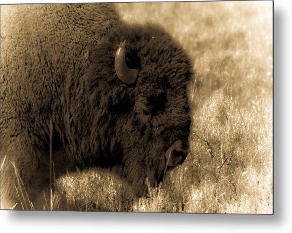 Yellowstone Bison Metal Print by Patrick  Flynn