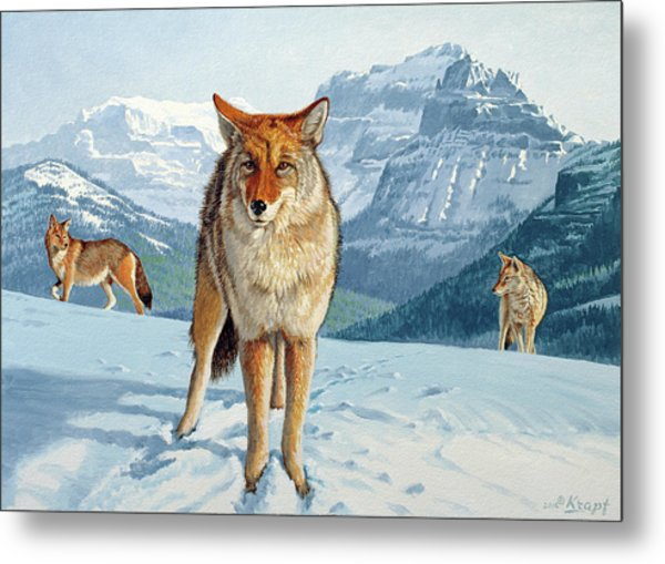 Yellowstone Coyotes Metal Print