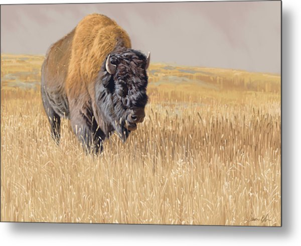 Yellowstone King Metal Print