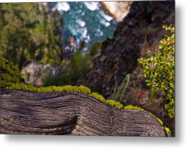 Yellowstone Moss Metal Print by Patrick  Flynn