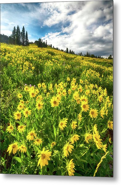Yellowstone Yellow Metal Print