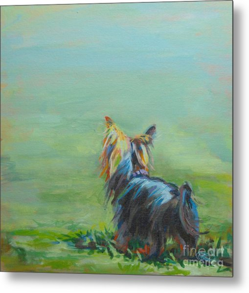 Yorkie In The Grass Metal Print