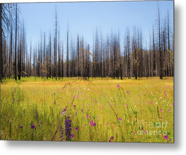 Yosemite Juxtaposition By Michael Tidwell Metal Print