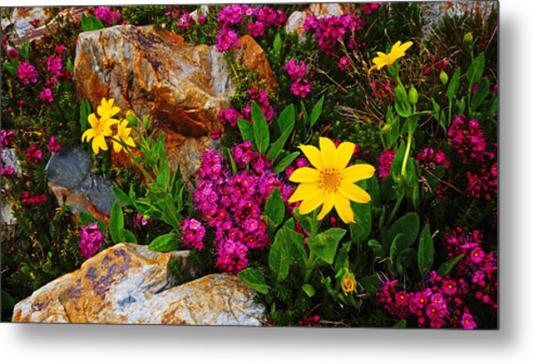 Yosemite Wildflowers Metal Print