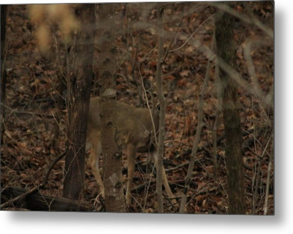 I See You  Metal Print by Charles Cook