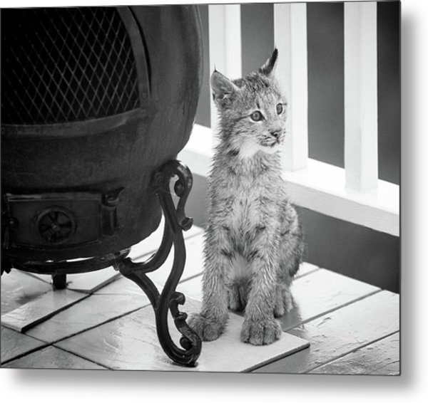 Metal Print featuring the photograph You Say Somethin by Tim Newton