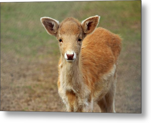 Young And Sweet Metal Print