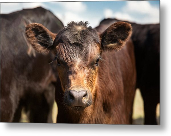 Young Angus Metal Print