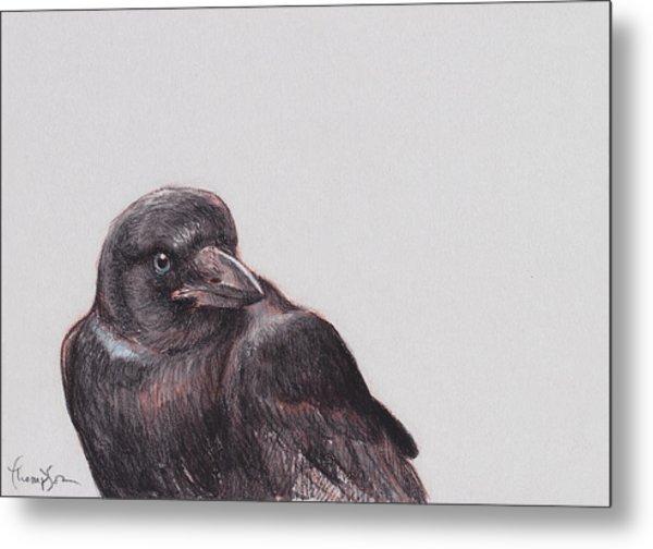 Young Crow 2 Metal Print