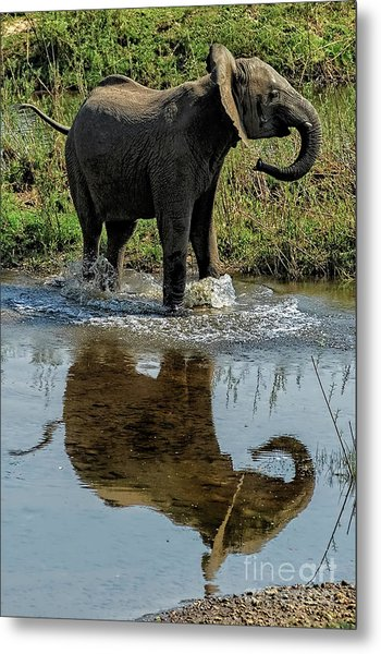 Young Elephant Playing In A Puddle Metal Print