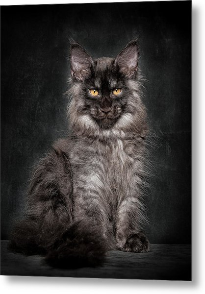Young Gentleman Metal Print