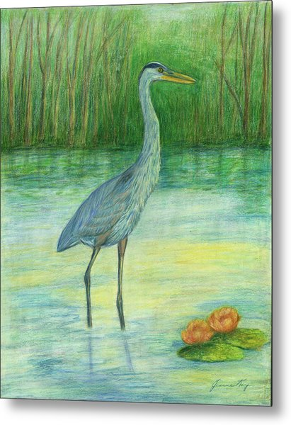 Young Great Blue Heron Metal Print