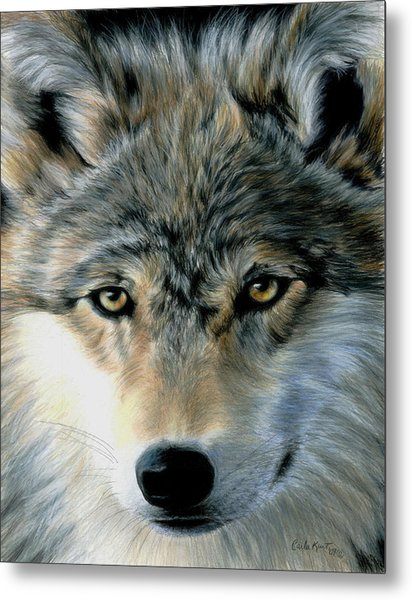 Young Wolf Metal Print