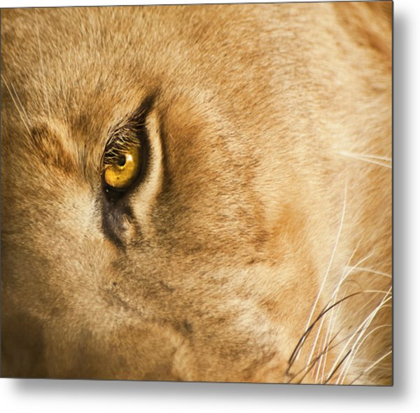 Your Lion Eye Metal Print