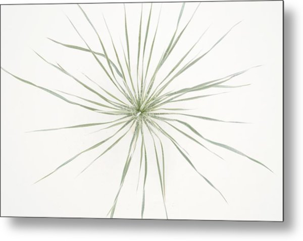 Yucca Whorl - White Sands National Monument Metal Print