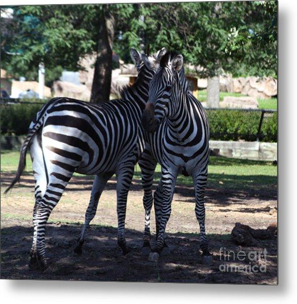 Zebra Buds Metal Print