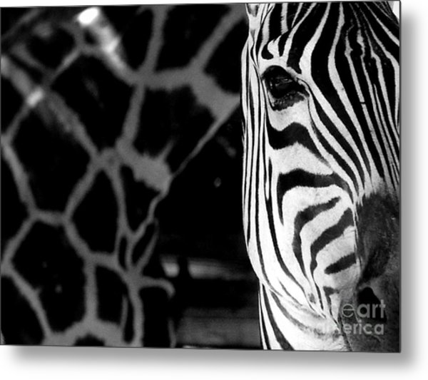 Zebra G Metal Print by Tonya Laker