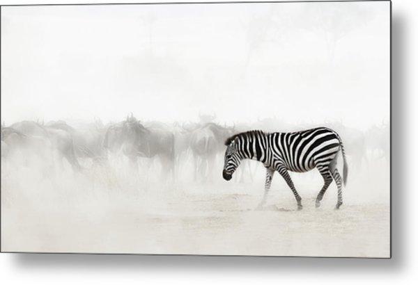 Zebra In Dust Of Africa Metal Print