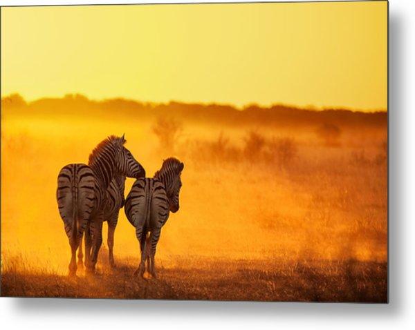 Zebra In The Light Metal Print