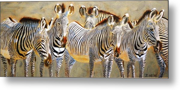 Zebra Herd Metal Print