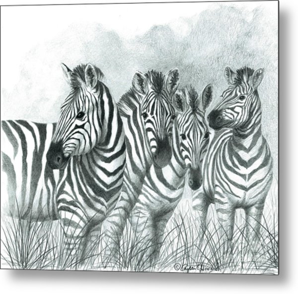 Metal Print featuring the drawing Zebra Quartet by Phyllis Howard
