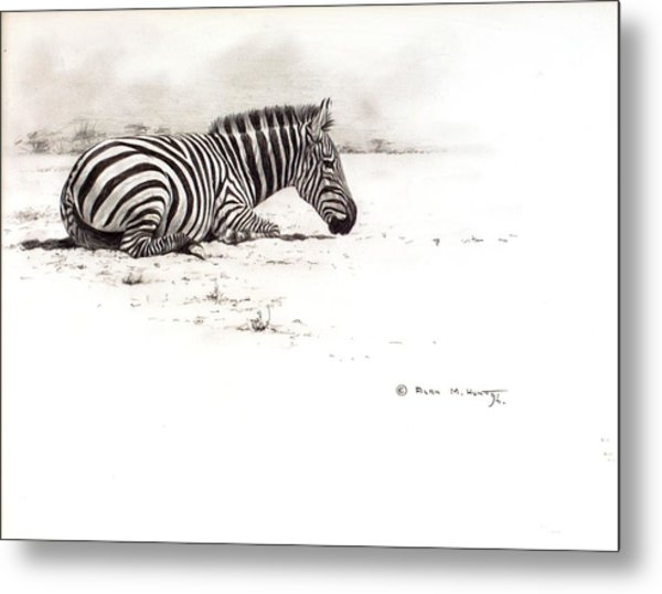 Zebra Sketch Metal Print