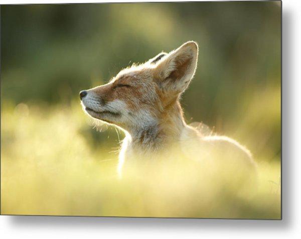 Zen Fox Series - Zen Fox Up Close Metal Print
