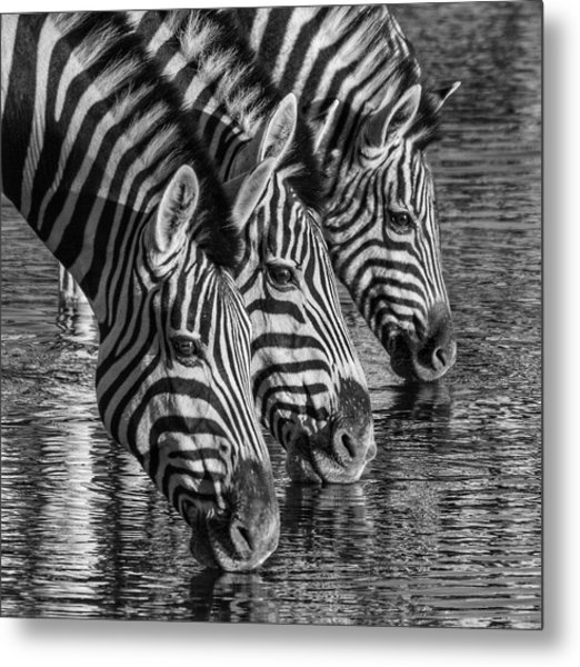 Zerba At The Watering Hole Metal Print