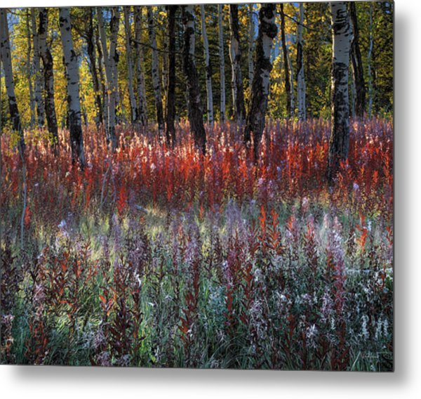 Autumn Light Metal Print by Leland D Howard