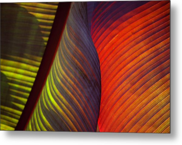 Banana Leaf 8602 Metal Print
