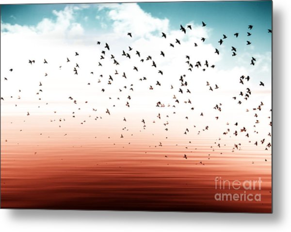 Birds Flying And Abstract Sky ,spring Metal Print
