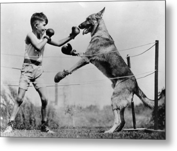 Boxing With Dog Metal Print by Topical Press Agency