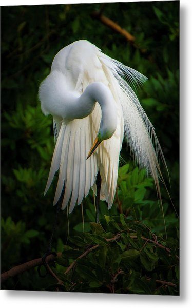 Metal Print featuring the photograph Breeding Plumage And Color by Donald Brown