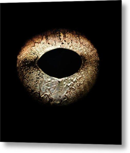Bullfrogs Eye, Close-up Metal Print