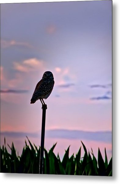 Burrowing Owl On A Stick Metal Print