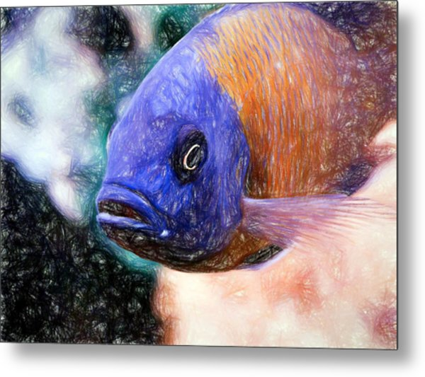 Colored Pencil Red Fin Borleyi Cichlid Metal Print