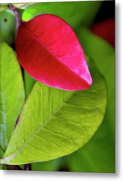 Colours. Red Metal Print