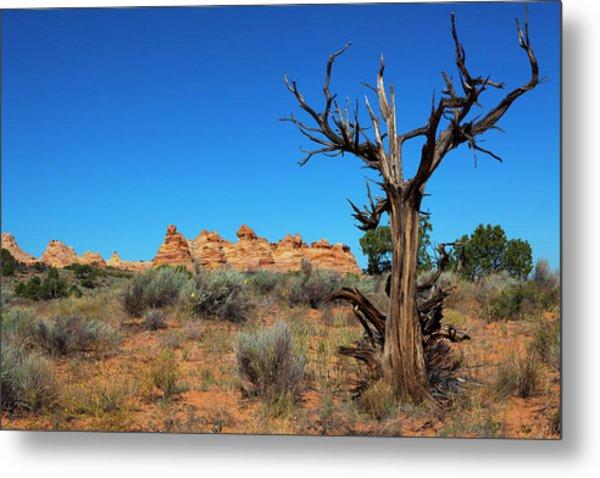 Desert Landscape Metal Print by Lucynakoch