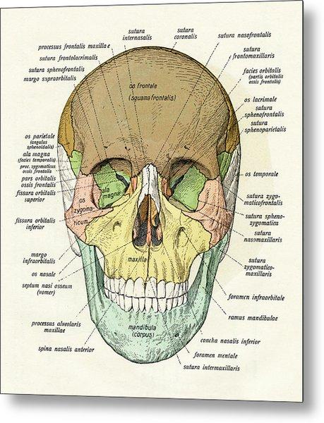 Diagram Of Human Skull Metal Print