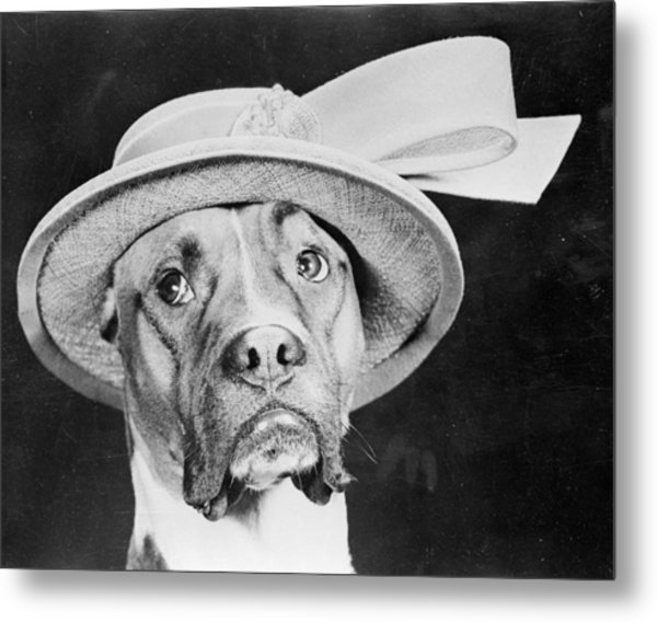 Doggy Hat Metal Print by Keystone Features