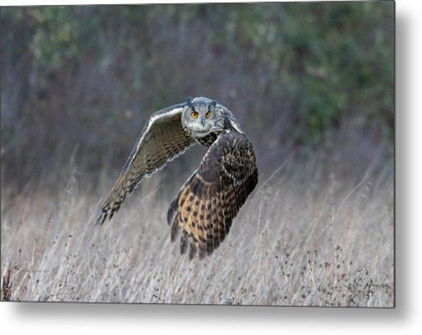 Eurasian Eagle Owl Flying Metal Print