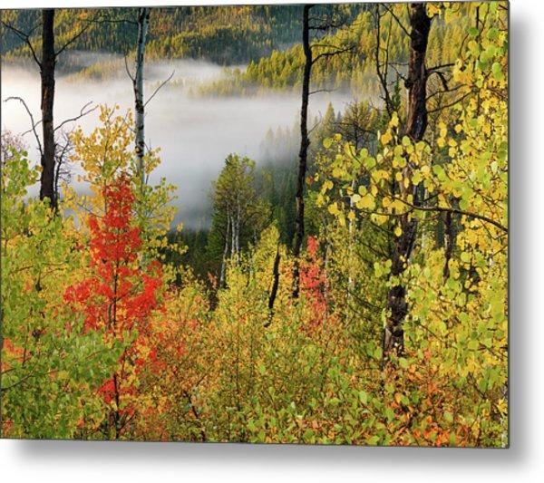 Fall Morning 2 Metal Print by Leland D Howard