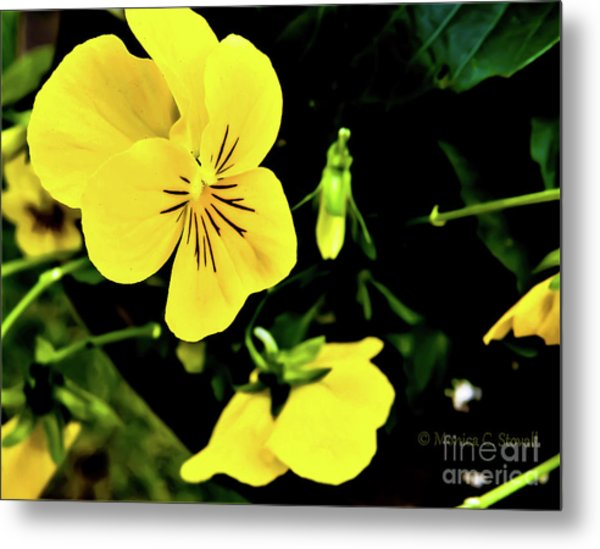 Flowers Hanging No. Hgf17 Metal Print