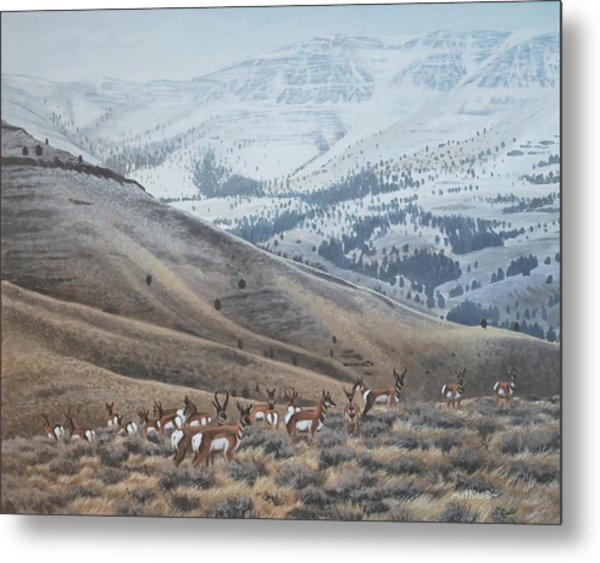 High Country Pronghorn Metal Print