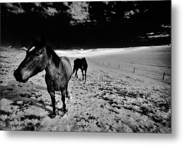 Metal Print featuring the photograph Horses On The Palouse by David Patterson